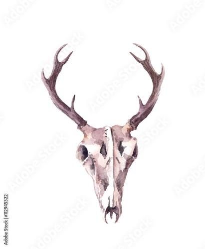 Keuken foto achterwand Waterverf Illustraties Deer skull. Watercolor