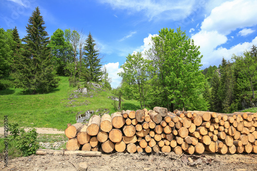 Fototapeta Pocięte drewno  obraz