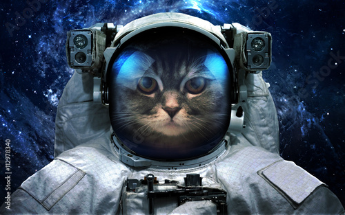 Fototapeta  Astronaut cat in outer space