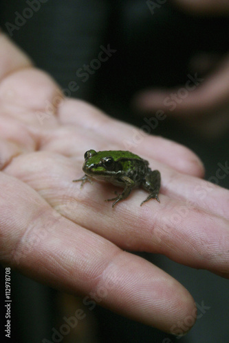 A tiny frog on a human finger