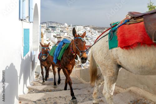 Fototapety, obrazy: Donkeys for riding in the city Fira.