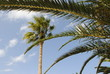 palm tree/through the branches
