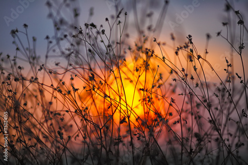 Poster Oranje eclat Dried flowers on a background sunset