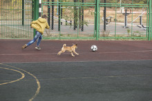 Boy And Dog Playing Soccer At ...