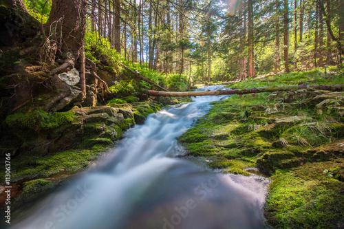 Foto auf Acrylglas Wald im Nebel Relaks i wakacje w górach