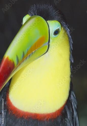 Keel-billed toucan (Ramphastos sulfuratus), Costa Rica, Central America