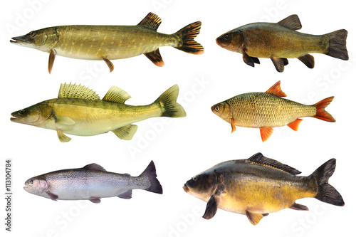 Valokuva  Fische 148
