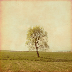 Panel Szklany Grunge Lonely tree in the field.Grunge and retro style.