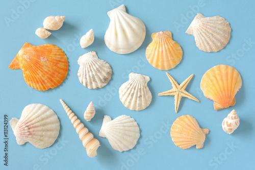 Fotografie, Obraz  夏イメージ 貝殻とヒトデ 水色背景