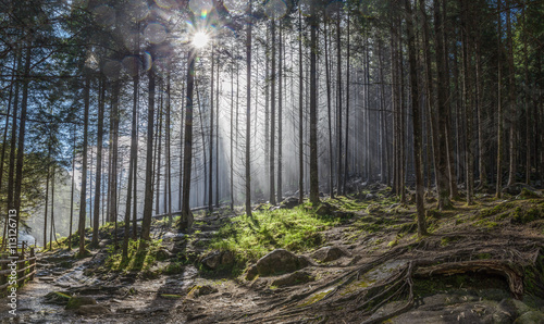 lesny-las-w-poblizu-reinfalls-w-reintal