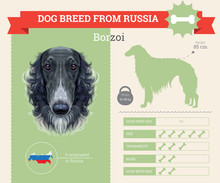 Borzoi Dog Breed Vector Infogr...