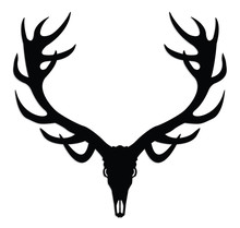 Deer Skull With Antlers/ Silhouette Illustration