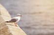 Sea birds soft light effect at sunlight.