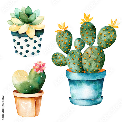 Watercolor Handpainted Cactus Plant And Succulent Plant In Pot