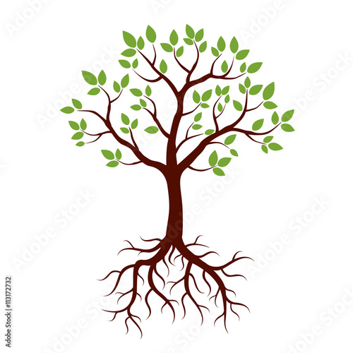 Foto  Shape of Tree, Roots and Green Leafs. Vector Illustration.