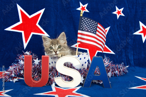 Patriotic Christmas Background.Patriotic Tabby Kitten Blue Background With Red Stars