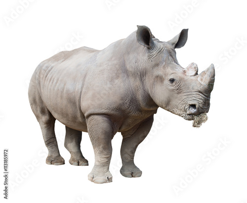 Poster de jardin Rhino white rhinoceros, square-lipped rhinoceros isolated