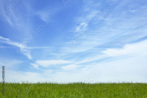 Blue sky over grassy meadow - 113188340