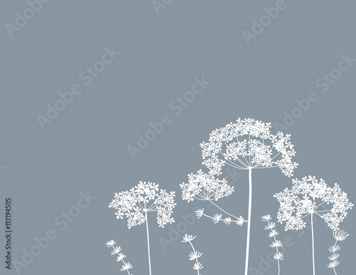 Fotografia queen anne's lace flower baby breath floral free-hand vector background