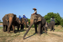 Mahout With Elephant On Riverside