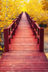 Fototapeta na wymiar wooden bridge & autumn forest.