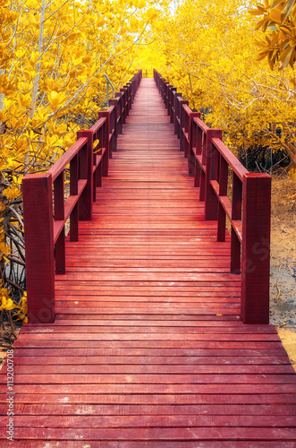 wooden bridge & autumn forest.