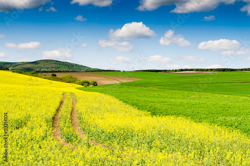 Poster Jaune Yellow oilseed rape field under the blue sky with sun