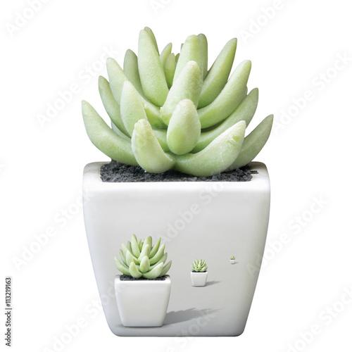 Spoed Foto op Canvas Cactus Aloe vera, Cactus.