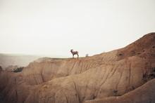 Mountain Goat Standing On Mountain