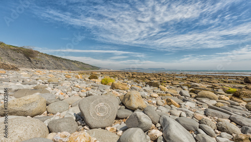 An ammonite fossil on the beach close to Lyme Regis on Dorset's Wallpaper Mural