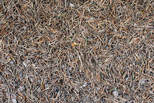 Surface Of Clay And Small Needles - Texture, Background 1