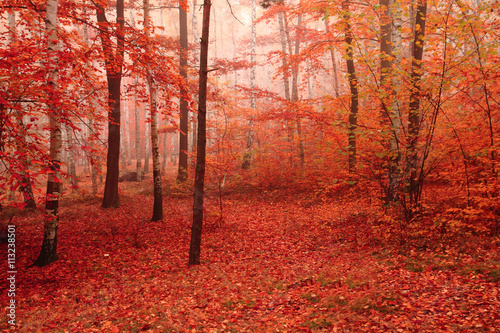 Keuken foto achterwand Rood traf. color autumn forest