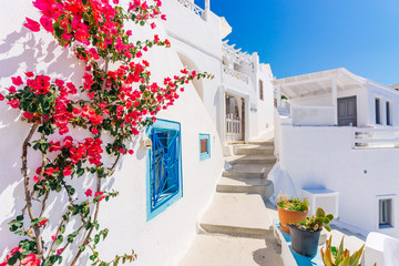 Traditional cycladic whitewashed street with blooming bougainvillea in the summer, Santorini, Greece