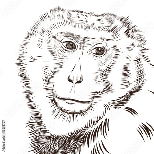 Photo Stands Hand drawn Sketch of animals Chimpanzee drawing vector. Animal artistic, use for your design.