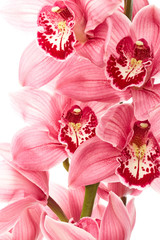 FototapetaOrchid flowers