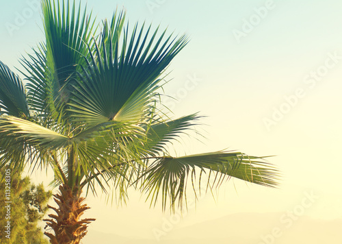 Poster Palmier Summer background with Palm tree against sky. Sea tour.