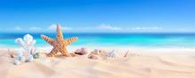 Golden Sand With Seashell And Starfish - Tropical Seashore