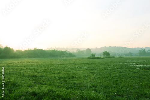 Foggy morning in meadow