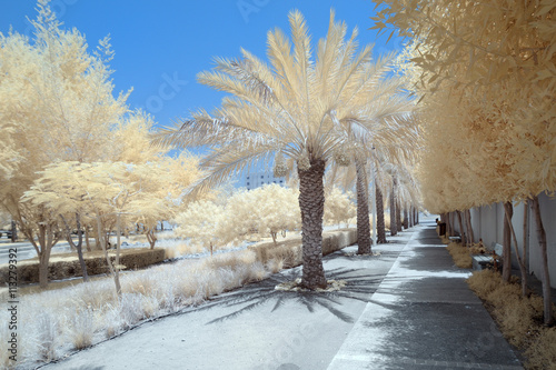 Photo  Infrared image of trees and shrubs in false color
