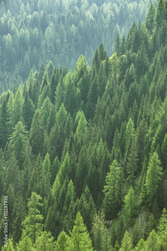 Foto auf Gartenposter Wald Healthy green trees in a forest of old spruce, fir and pine
