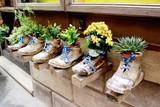 Fototapeta Kwiaty - Ekspozycja - kwiaty w butach