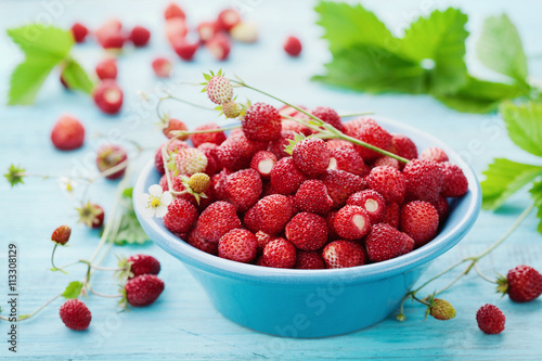 Fototapeta Wild strawberry in blue bowl on rustic table, vintage style, sweet berry for summer dessert, Fragaria obraz na płótnie