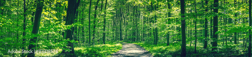 Poster de jardin Vert Forest trail in a green beech forest