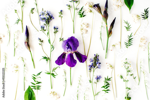 Poster Iris purple iris flower on white background. Flat lay composition, top view