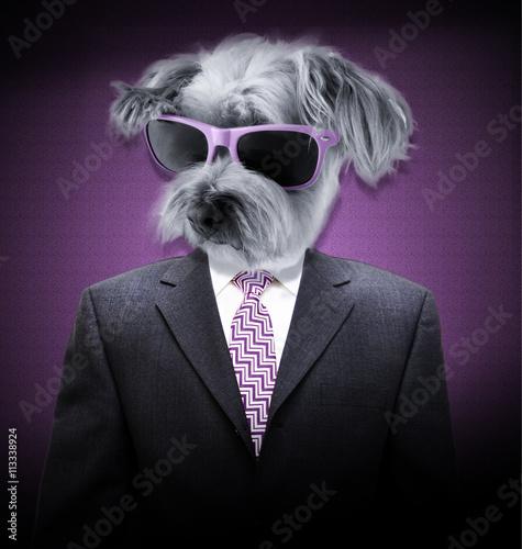 Fotografie, Obraz  Portrét homme avec tête de chien et lunetami de soleil