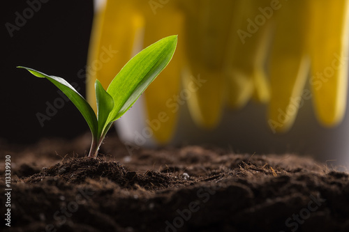 Poster Vegetal Sprout in ground