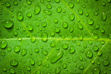 Water Droplets On A Leaf, Background, Nature.