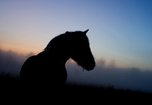 Silhouette Of A Horse At Dusk