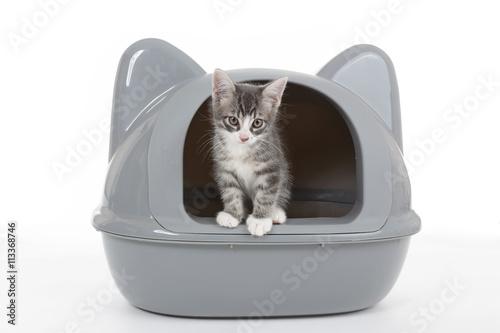 Photographie  chaton dans litière