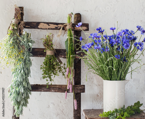 fototapeta na drzwi i meble different fresh herbs on background old wall